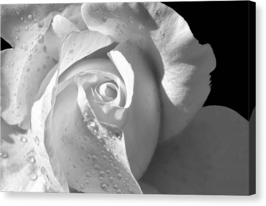 Romantic White Bridal Rose Canvas Print