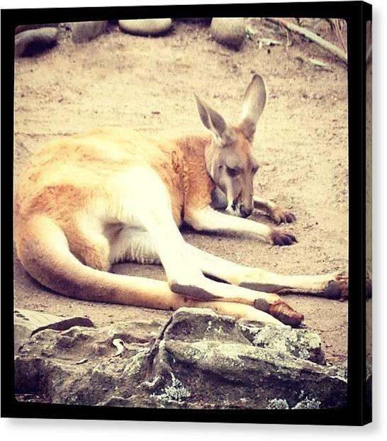 Kangaroo Canvas Print - Roo by Melissa Lyons