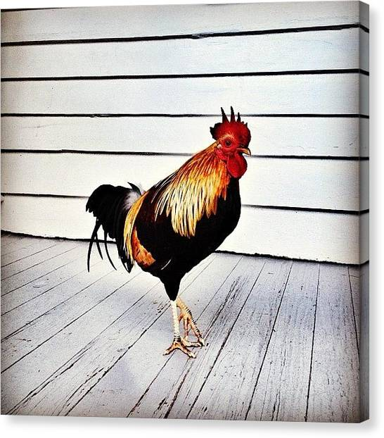 Roosters Canvas Print - Roosters Were Walking Around Everywhere by Rachel Z