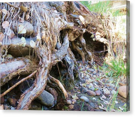 Roots And Stones Canvas Print by Don Barnes