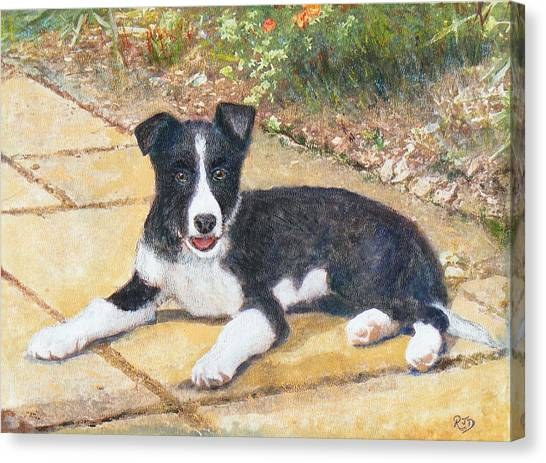 Rory Border Collie Puppy Canvas Print