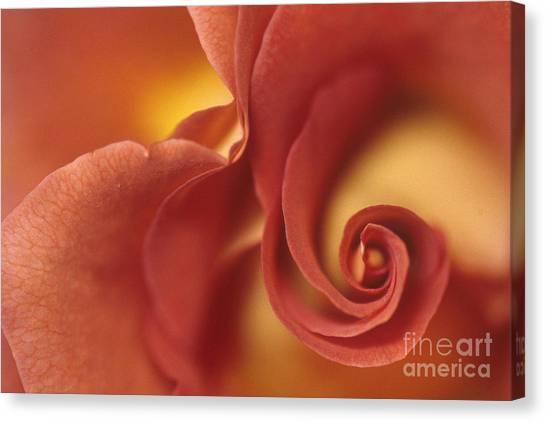Rose 2 Canvas Print