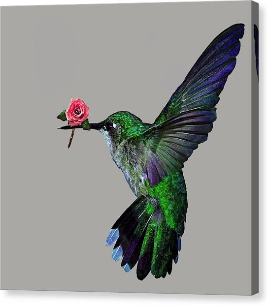 Rose Baring Bird Canvas Print by Carly Ralph