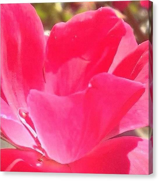 Floral Canvas Print - #rose #flower In My Garden #webstagram by Irina Moskalev