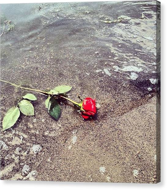Red Rock Canvas Print - Rose On The Shore by Kelly Diamond