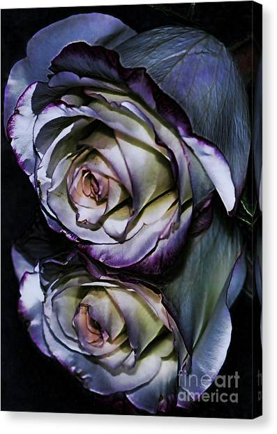 Rose Reflection 2 Canvas Print by Marianne Troia