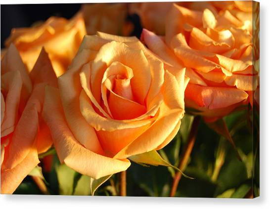Roses For Me Canvas Print