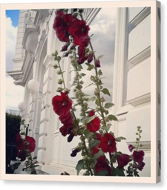 Red Rock Canvas Print - Rote Malve Auf Weißem Grund  #red by Valnowy Photography