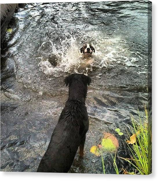 Rottweilers Canvas Print - #rotti #rottweiler #lake #lilypad #swim by Regan Webb