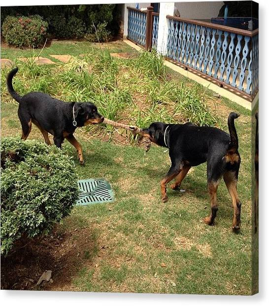 Rottweilers Canvas Print - Rotties Playing by Adriana Guimaraes