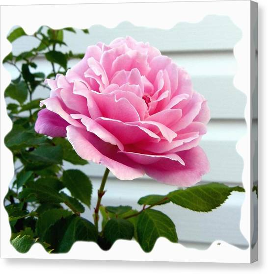 Kate Middleton Canvas Print - Royal Kate Rose by Will Borden