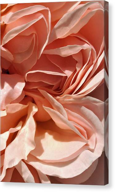 Ruffles And Ridges Canvas Print