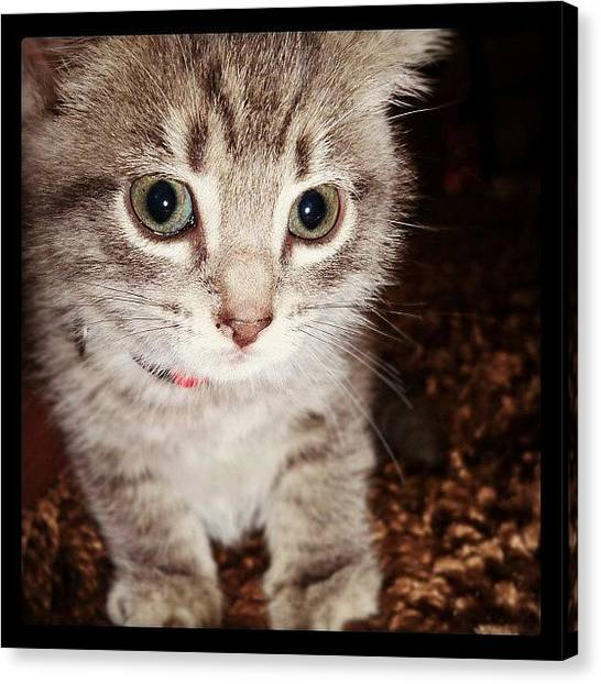 Cute Canvas Print - Ruger Before She Turn In To A 16lb Fat by  Abril Andrade Griffith