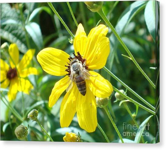 Rumble With A Bee Canvas Print by Tina McKay-Brown