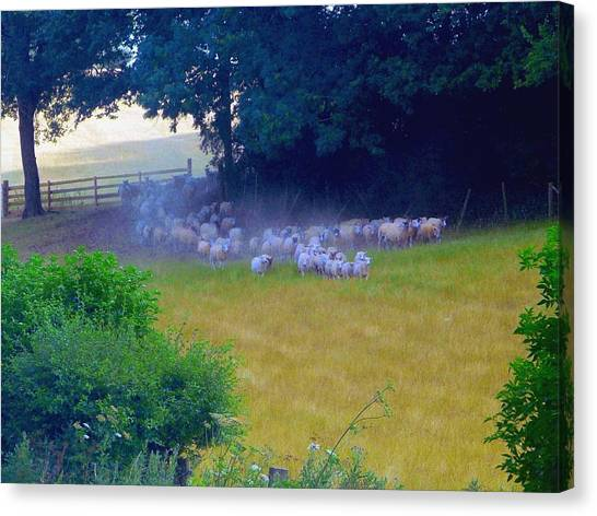 Running Of The Sheep Canvas Print