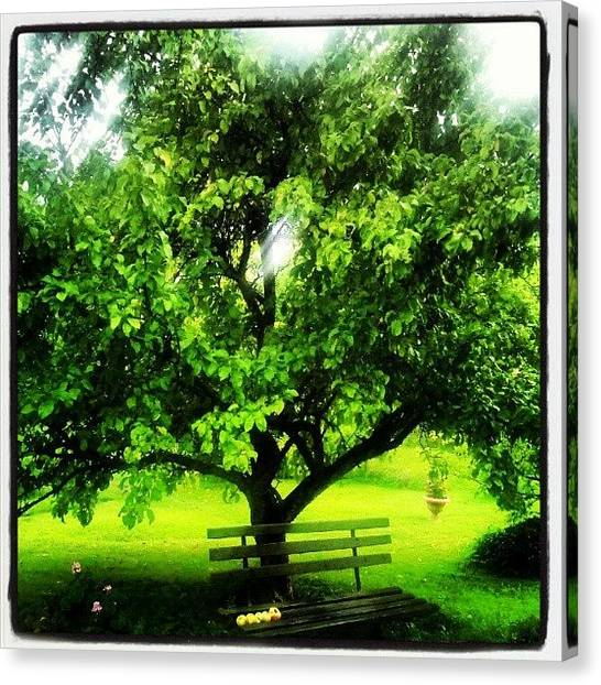 Fruit Trees Canvas Print - #russia #spb #natura #apple #awesome by Leopoldo Ulivieri
