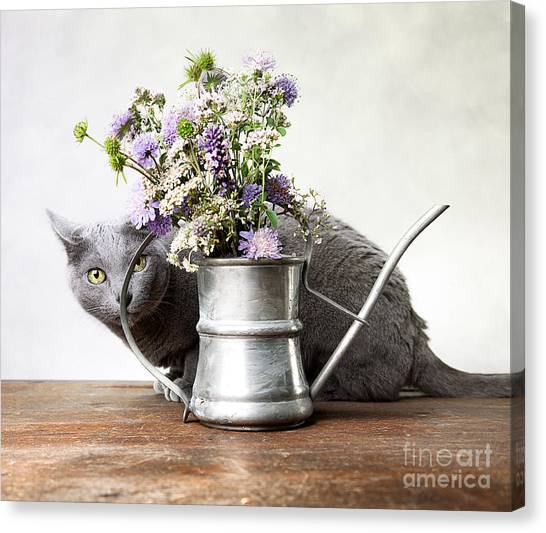 Russia Canvas Print - Russian Blue 03 by Nailia Schwarz