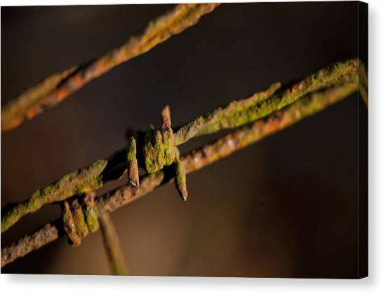 Rusty Old Barbed Wire Photograph By Wilma Birdwell