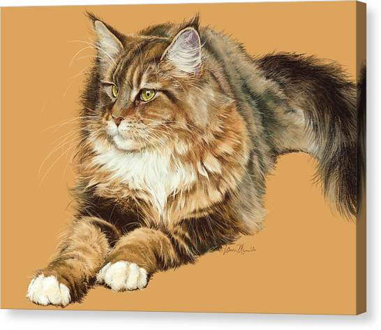Main Coons Canvas Print - Sadie by Laurie Musser