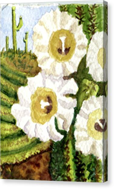 Saguaro Spring Canvas Print