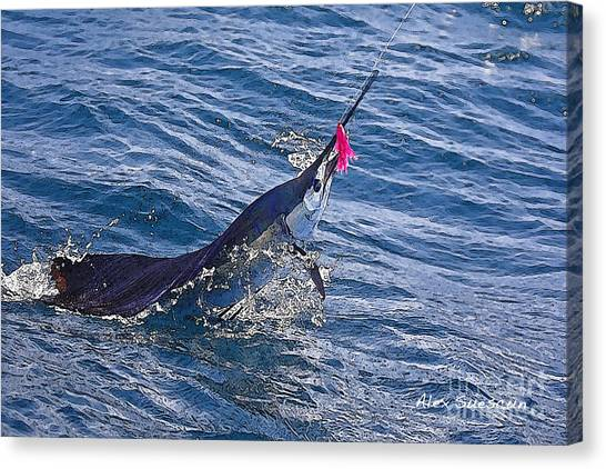 Sailfish Dance Canvas Print