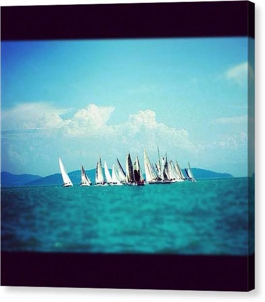 Ocean Animals Canvas Print - Sailing Race In İstanbul by Yalin Tuna