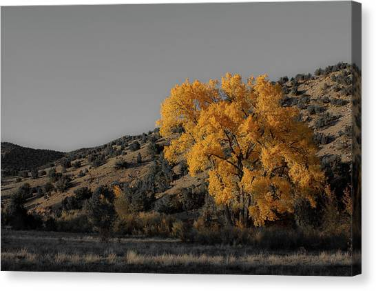 Salto's Tree Canvas Print
