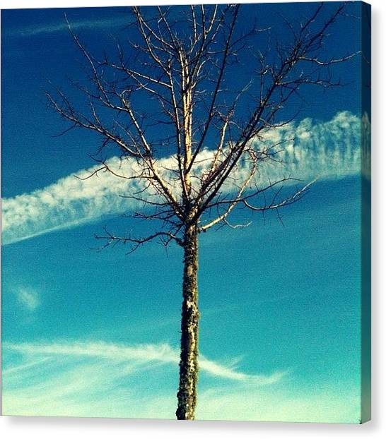 Angle Canvas Print - Same #tree Different #angle (: #sky by Seth Stringer