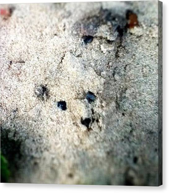 Bears Canvas Print - #sand #beach #bear #pattern #pretty by Pictures 🌺 Photos 📷