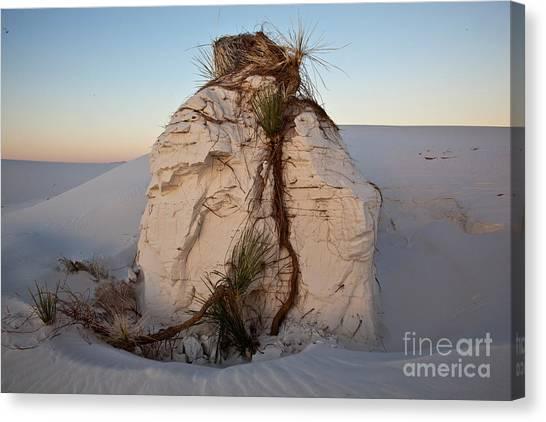 Sandy Desert Canvas Print - Sand Pedestal With Yucca by Greg Dimijian
