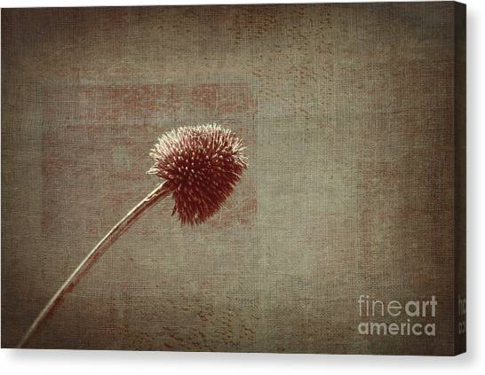 Plant Canvas Print - Sans Nom - S03p11t05 by Variance Collections