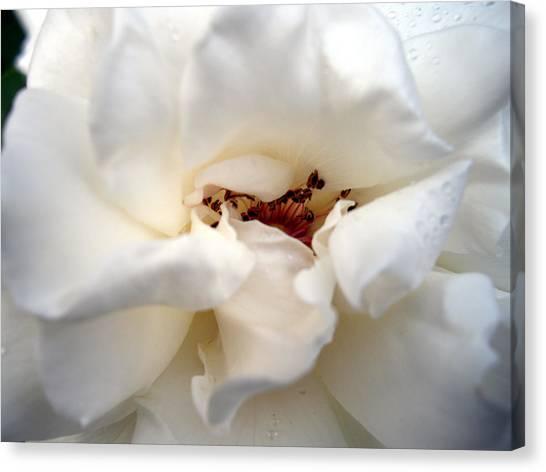 Satin White Canvas Print
