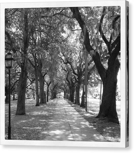 Pathway Canvas Print - Savannah's Willow by Kenny Kerns