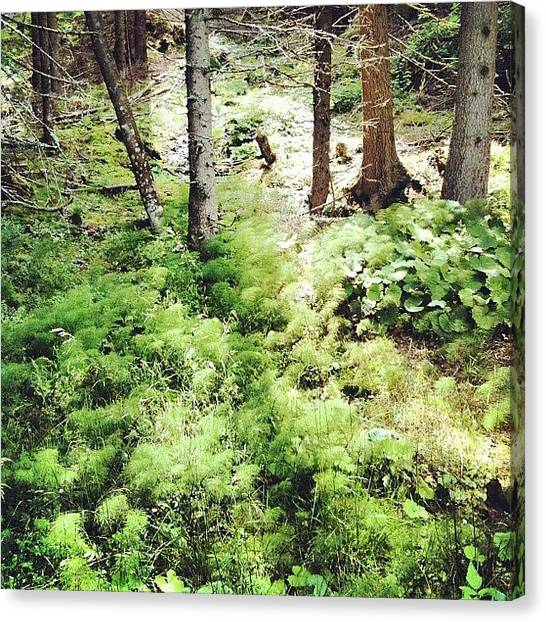 Wilderness Canvas Print - Save Me by Florian Divi