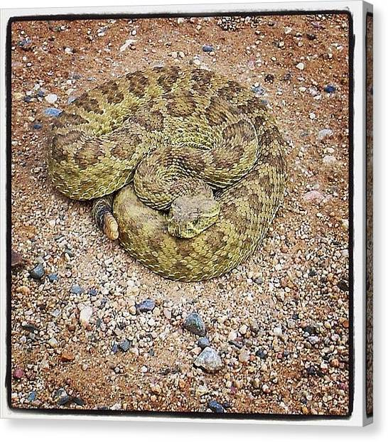 Rattlesnakes Canvas Print - Say Hello To My Little Friend! Why You by Chris Bechard