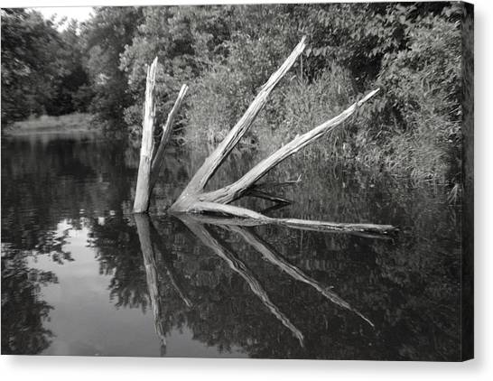 Scenes From The Kayak    Downed Trees Of The Ec River Back Waters Canvas Print by Artist Orange