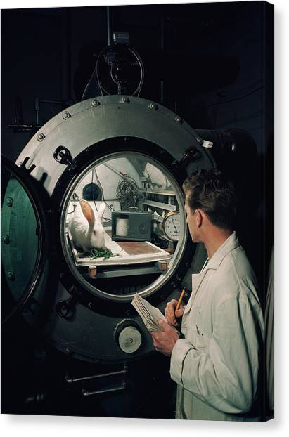 Scientist Observes A Rabbit, 1960s Canvas Print by Archive Holdings Inc.
