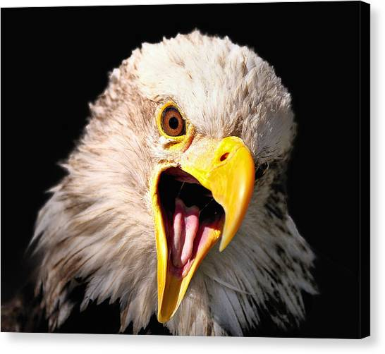Screaming Eagle II Black Canvas Print
