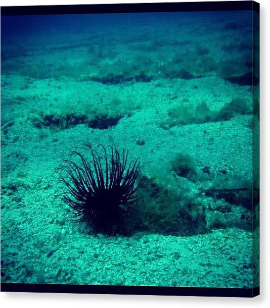 Underwater Canvas Print - #scuba #scubadivivg #scubadive by Kali Stara