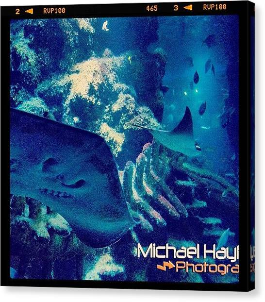 Underwater Canvas Print - #sea #aquarium #sealife #london by Mike Hayford
