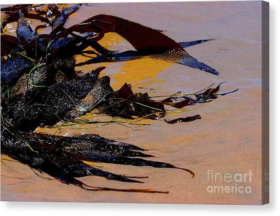 Pismo Beach Sea Drift Canvas Print