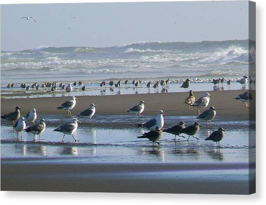 Sea Gulls And Breakers Canvas Print