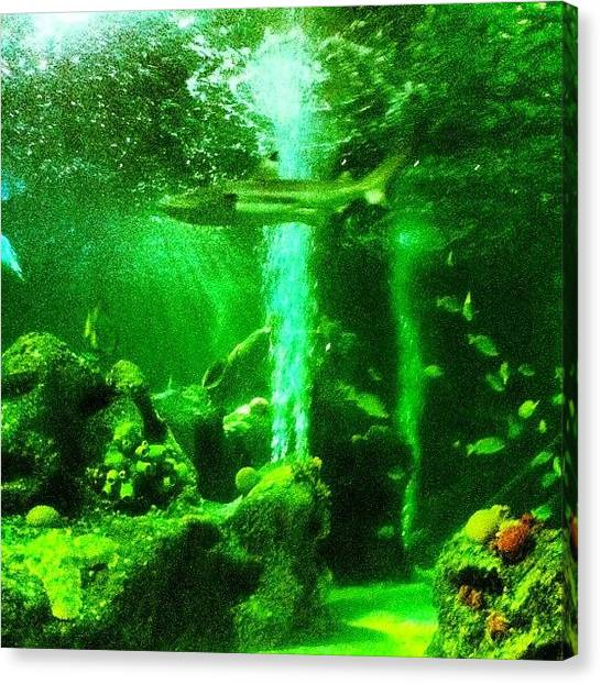 Hammerhead Sharks Canvas Print - Sea Life by Kimberley Burleigh