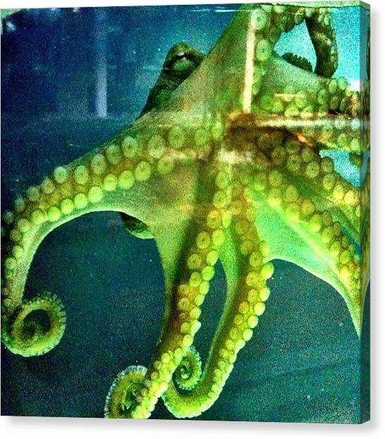 Octopus Canvas Print - Sea Monster by Casey Fessler