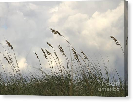 Seagrass Canvas Print - Sea Oats by Blink Images