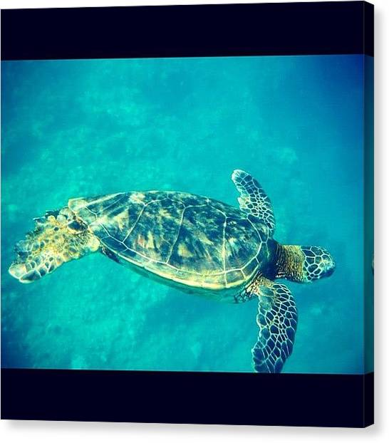 Ocean Animals Canvas Print - Sea Turtle In Action by Kerri Lacey
