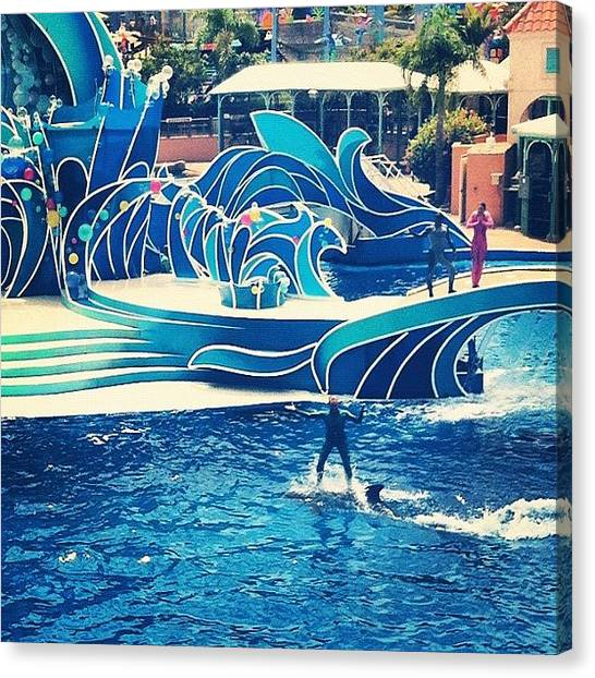 Dolphins Canvas Print - #sea #world #people #riding #dolphins by Taylor Payne