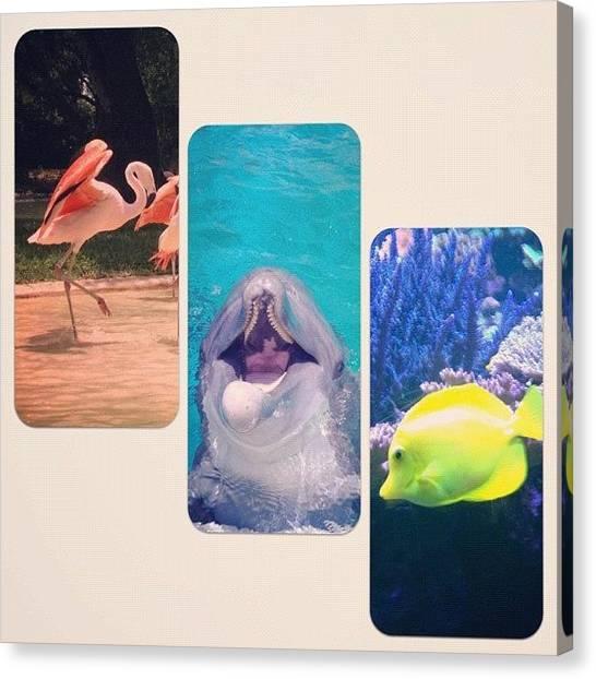 London2012 Canvas Print - Sea World, San Antonio, Tx by Arturo Jimenez