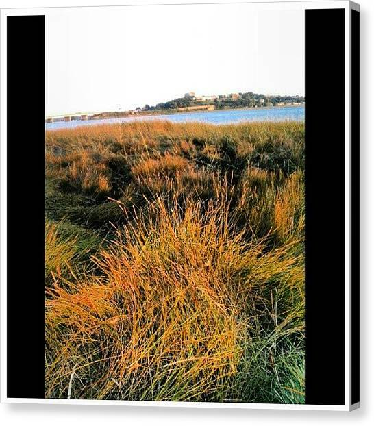 Seagrass Canvas Print - Seagrass Back Cove, Portland,  Maine ~ by Chris T Darling