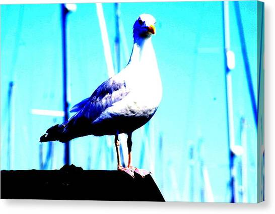 Seagull  Canvas Print by Amanda Pillet